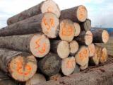 Vender Troncos Serrados Pinus - Sequóia Vermelha, Abeto - Whitewood Letônia