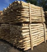 Drewno korowane z akacji