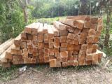 null - Teak Squares Select & better from Colombia