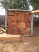 Lasy I Kłody Uganda - Bale, Doussie