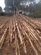 Southern Yellow Pine Pulpwood Logs
