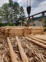 Vend Abri De Jardin Epicéa - Bois Blancs Résineux Européens