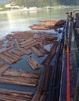 Fir/Hemlock Logs in Bulk from Canada