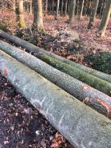 Beech Construction Round Beams, 40+ cm