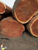 Iroko/Sapelli/Doussie Saw Logs, 50+ cm