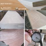 Okoumé Commercial Plywood (Poplar Core), 2.5-21 mm