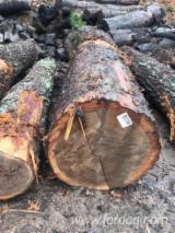 Find best timber supplies on Fordaq - Practerra - White Oak/Chestnut Veneer Logs, 2/3/4SC, 13