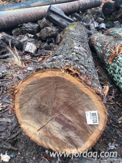 """White Oak/Chestnut Veneer Logs, 2/3/4SC, 13""""+"""