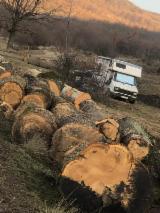 Oak Saw Logs, 30+ cm