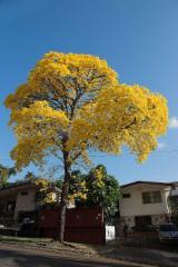Árvores Maduras À Venda - Inscreva-se Na Fordaq Para Comprar Ou Vender Plantações  - À Venda Colômbia