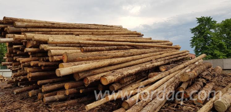 Vender Troncos Serrados Pinus - Sequóia Vermelha, Abeto - Whitewood Polônia