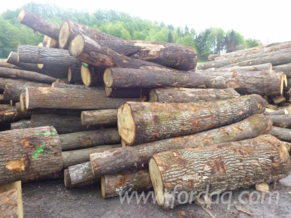 FSC-White-Oak-Saw-Logs--B-C-Grade