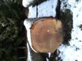 Forest And Logs - Oak Saw Logs Required (France & Belgium), 5-15 m