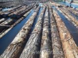 Forest And Logs - Fir/Hemlock Saw Logs (Bulk from Canada), 24-40'