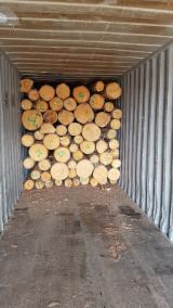 Spruce Saw Logs, ABC / CD, diameter 20+ cm
