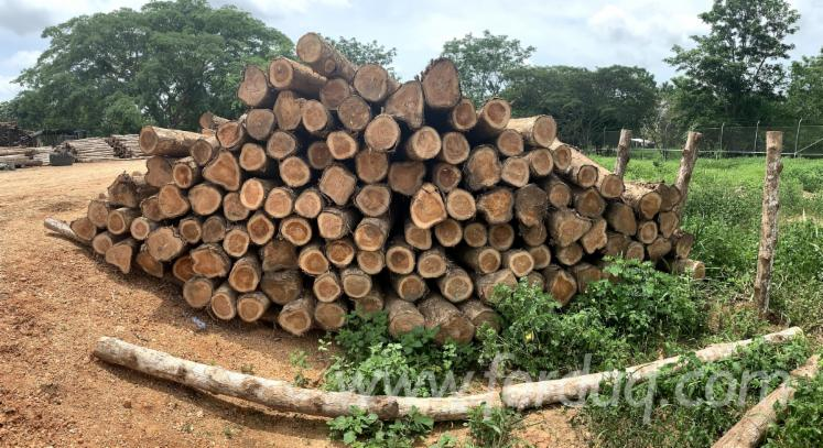 Colombian-Teak-Saw-Logs