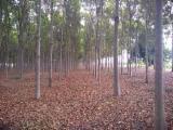 Terreno Forestale - Vendo Terreno Forestale Mogano Minas Gerais - MG