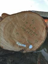 Okoumé/Iroko/Padouk Square Logs, 80+ cm