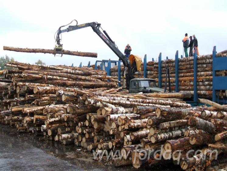 Vender-Troncos-Industriais-Abedul-R%C3%BAssia