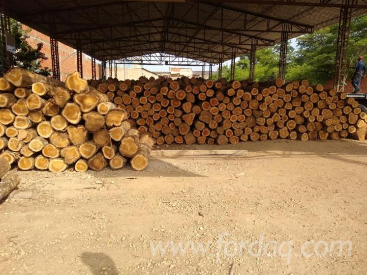 FSC-Teak-Saw-Logs