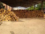 FSC Teak Saw Logs, 40-140 cm