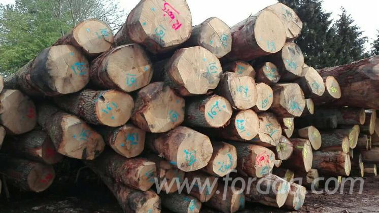 White-Oak-Saw-Logs