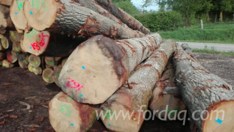 White Oak Saw Logs, 11.8 m