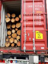 Spruce Logs For Sale, 20+ cm