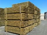 Vender Vigas Redondas De Construção Pinus - Sequóia Vermelha FSC Belorussia