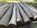 Find best timber supplies on Fordaq - ATLAS TIMBER & HARDWOOD ApS - Ash Logs For Sale, 3 m Long