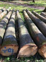 European Red Oak Logs, A/B/C, diameter 30+ cm