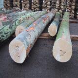 European White Ash/Beech/Oak Logs, 4-15 m
