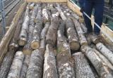 Vender Troncos Industriais Amieiro Preto Comum, Abedul, Aspen FSC Belorussia