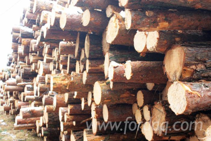 Pine / Spruce Technological Wood - Industrial Logs