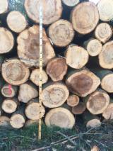Schnittholzstämme, Tanne , Kiefer - Föhre, Fichte