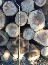 Find best timber supplies on Fordaq - ATLAS TIMBER & HARDWOOD ApS - Buying Spruce / Fir / Pine Logs, diameter 25; 30+ cm