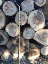 Kłody Tartaczne, Jodła Pospolita , Sosna Zwyczajna - Redwood, Świerk - Whitewood