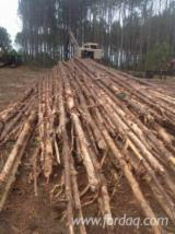Southern Yellow Pine Pulpwood Logs, 8'+