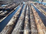 Fir/Hemlock Saw Logs (Bulk from Canada), 24-40'
