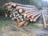 Vender Troncos Serrados Pinus - Sequóia Vermelha, Abeto - Whitewood França