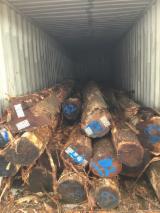 Forest And Logs - Tasmanian Blackwood Saw Logs, 40+ cm
