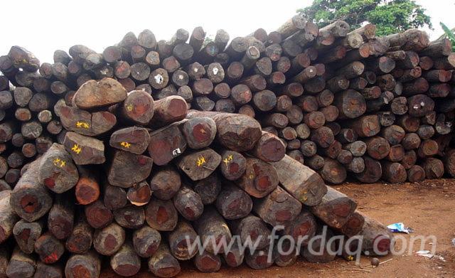 Vendo-Tronchi-Da-Sega-Rosewood-Africano--Machibi