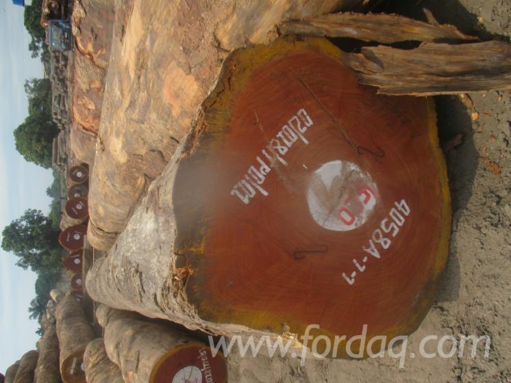 Doussie Saw Logs, 60+ cm