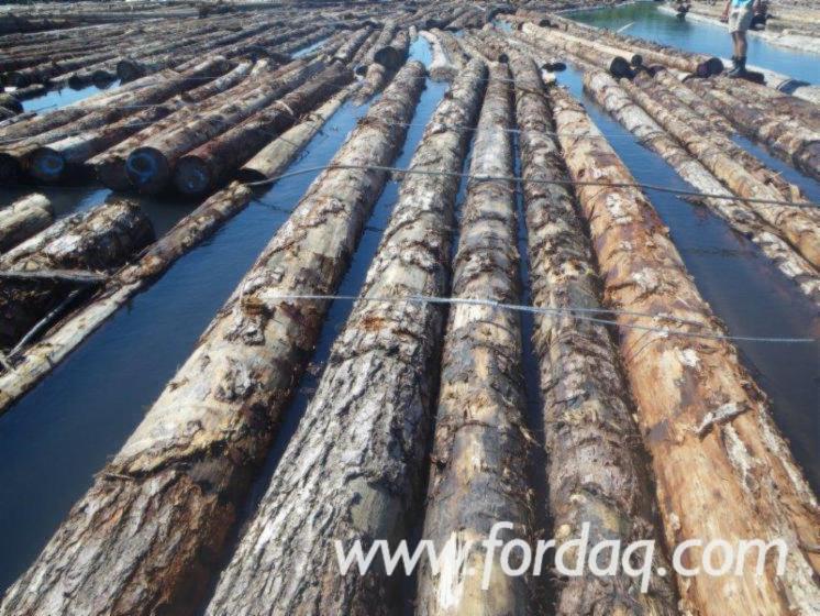 Fir-Hemlock-Saw-Logs-%28Bulk-from-Canada%29