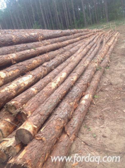 Southern-Yellow-Pine-Pulpwood-Logs