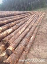 Southern Yellow Pine Pulpwood Logs, 8'+