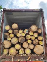 Spruce Saw Logs, BCD, 20+ cm