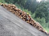 Spruce Saw Logs, BCD Grade, 5.10 m