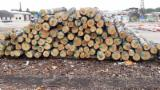 Birch Saw Logs, ABC, 12-26+ cm