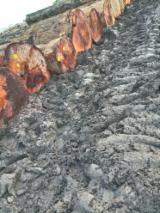 Iroko/Tali/Padouk/Sapelli Square Logs, 90+ cm